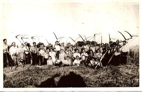 Az első közös aratás 1959