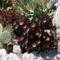 Eze 1 jellegzetes mediterrán növények