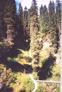 Erdély Pádis fennsík ösvény fenyők között