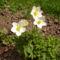 virágaim_52
