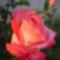 virágaim_57