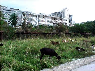 Önfenntartó város Kubában