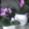orchidea 5