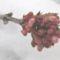 Virág a hóban - BANGITA, CHARLES LAMONT