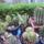 Kaktuszok_1182448_4982_t