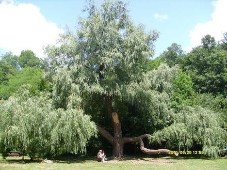 Koloska völgy, pihenőpark, Balatonfüred