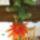 Nagyné Kati kaktuszai