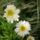Most nyíló virágaim-Edit