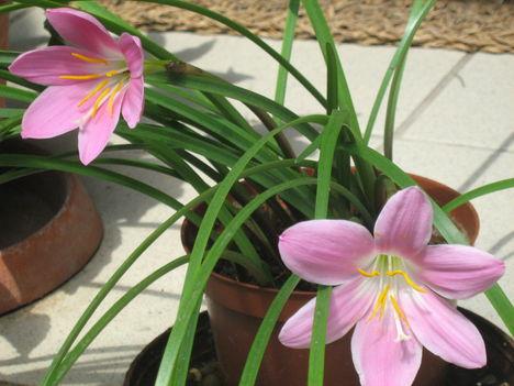 Nyári virágok 090