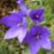 virágaim_66