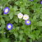 virágaim_67