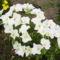virágaim_68