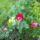 Gombár Mariann kertje