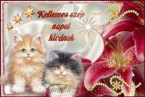 Kellemes szép napot kívánok