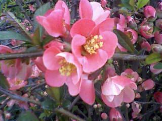 Virágok a kertünkben 3