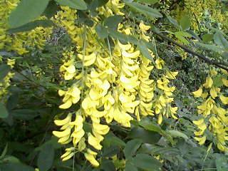 Virágok a kertünkben 6