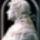 Portrék Mátyás királyról