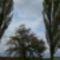 a fák égig érnek