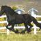 lovas kép 18