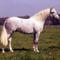 lovas kép 21