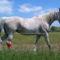 lovas kép 9