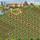 Stampedli gazda farmja