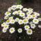 virágaim_61