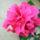 Bné Zita virágai