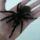 Buzás Csaba pókjai