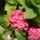 Szepesiné Kata virágai