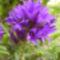 Virágaim_69