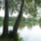 Árnyat adó fák