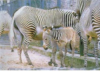 állati család 1