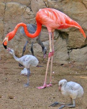 állati család 15