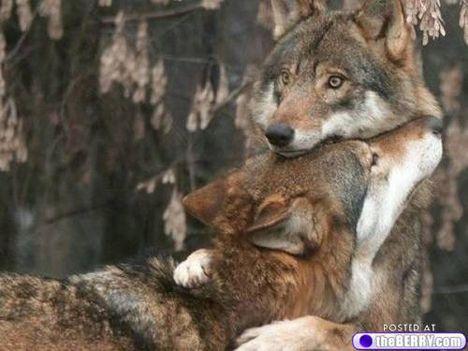 állati család 4
