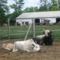 Bio állattartás2