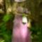lila ruhás hölgy