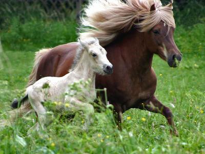 lovas kép 20