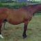 lovas kép 5