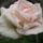 Perreyné Zsuzsa Sue53 virágai