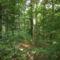 Szeretem az erdőt.