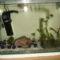 20l-es akváriumom I