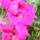 Marcsitól virágok