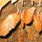 Aggteleki Cseppkőbarlang 11