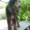 Dog Dizájn Kutyakozmetika Kalocsa 3