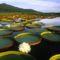 pantanal nemzeti park 1