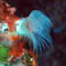 víz alatti világ 15
