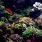víz alatti világ 16