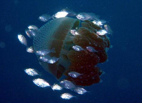 víz alatti világ 17