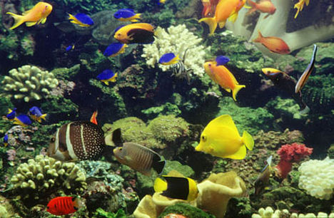 víz alatti világ 18
